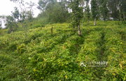 94 cent land for sale in Ambalavayal @ 66 lakh