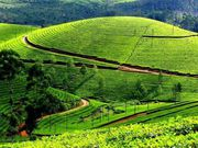 Munnar / Alleppey / Thekkady Tour Packages
