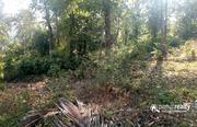 50 cent investment purpose land in Chennalode near Padinjarathara