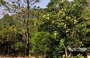 75 cent  investment purpose land  in Padinjarathara near Banasura dam
