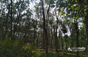 1.20 acre Resort purpose land in Kelamangalam near Kenichira