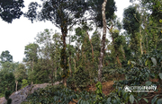 Excellent investment land in Meppadi .Wayanad