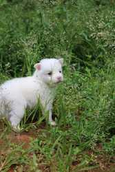 Spitz puppies for sale in calicut.