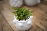 live plants with ceramic pots