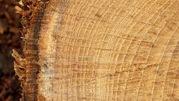Buy Indian Rosewood |Kerala teak wood |Teak wood