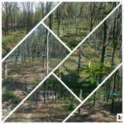 KOODAL,  Rubber Plantation For Sale,  2.86 A,  72 Lac