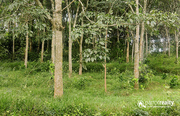 50 cent land for sale in Kallonikunnu near irulam - Wayanad