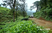 Farm purpose property available in Wayanad