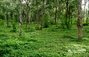 Well demanding 2 acre farm purpose property available in Pulpally…..