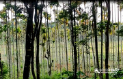 Agriculture land available in Wayanad @ 20 lakh