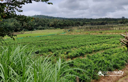 3.55 acre Agriculture property available near Pulpally @ 45lakh…..