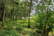 Farm Purpose land Available in Wayanad……