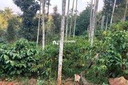 60 cent land for sale in Arivayal near Bathery…..