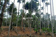 45 cent plot for sale in Vilambukandam @ 65000/cent