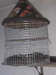5 quails and 2 cages for sale