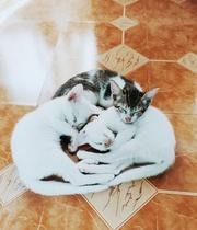 3 twelve-fourteen week old kittens for sale,